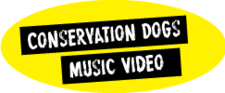 Button Conservation Dogs Music Video