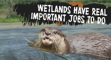 Wetlands Have Real Important Jobs Title