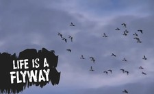 Life Is A Flyway